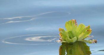 Najava: Henkel i METRO obeležavaju Svetski dan vode UN
